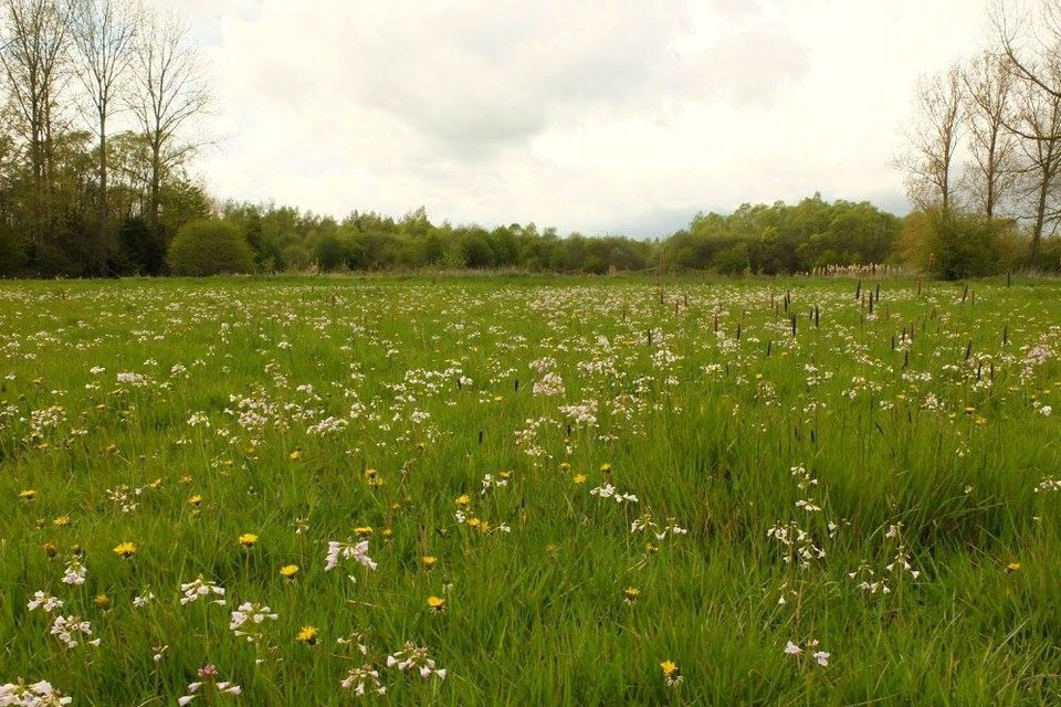 De biodiversiteit in de Getevallei is groot.