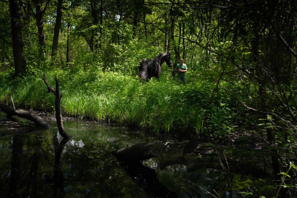Yves met een van zijn Friese paarden in het bos.