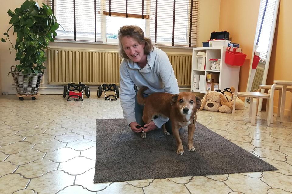 Liesbet Distelmans gebruikt haar eigen (gezonde) hond Toetsie even als model om een zachte brace aan de achterpoot te demonstreren.