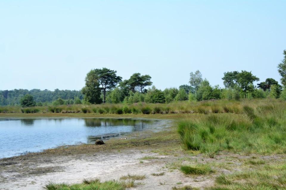 Wordt dit mooi stukje natuur in Grenspark Kalmthoutse Heide ooit verheven tot een Nationaal Park? Dinsdag wordt kandidatuur duidelijk.