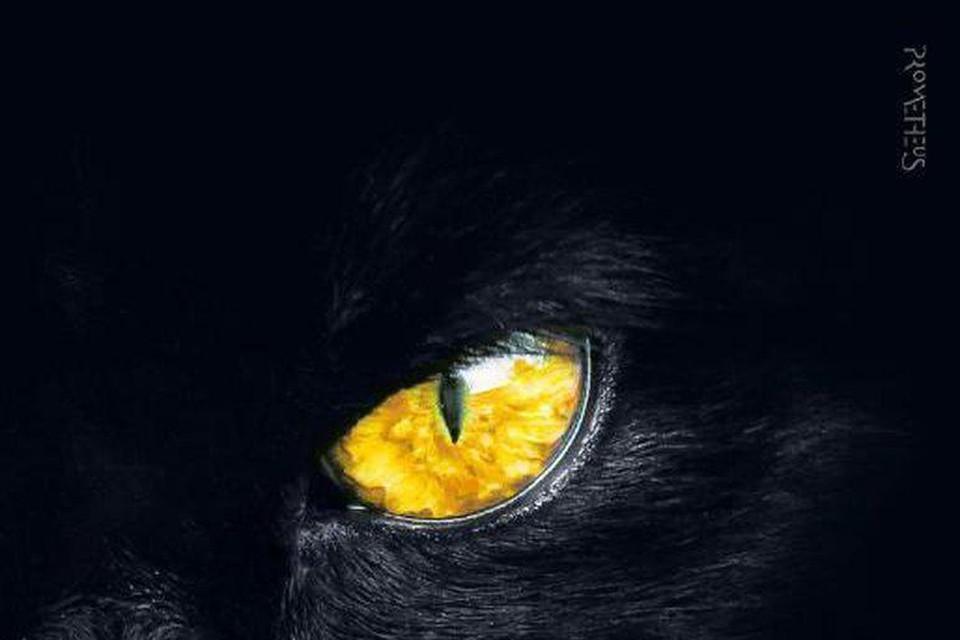 In 'De nachtdienst' valt auteur Esther Verhoef terug op haar kennis over (huis)dieren.