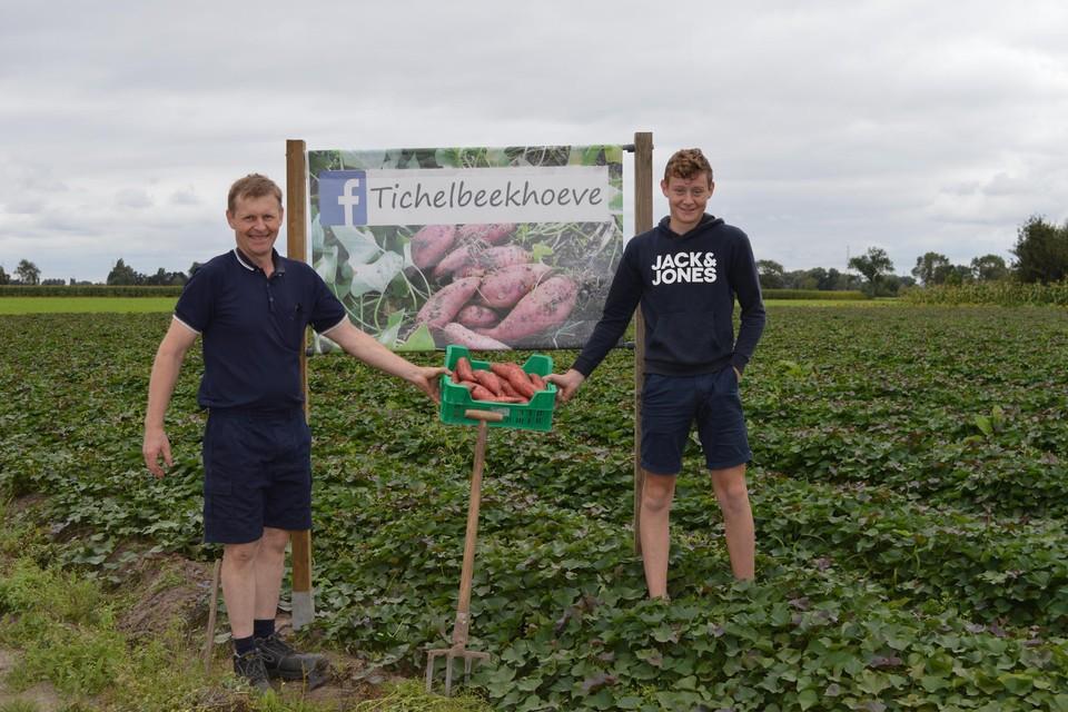 Boer Wim en zijn zoon Niels hebben hun eerste bak zoete aardappelen geoogst. Nog een halve hectare te gaan.