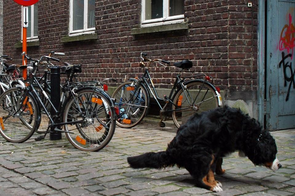 Volgens cijfers uit 2018 kwispelen in Gent zo'n 32.000 geregistreerde hondjes rond